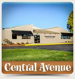 contact_central-avenue