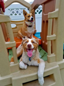 Cute boarding guests playing on daycare equipment.