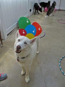 doggy-daycare_01