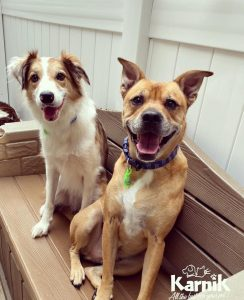 Benefits of Doggy Daycare
